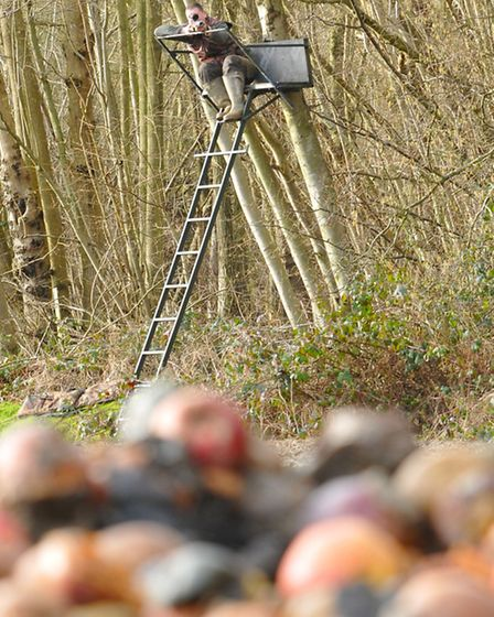 Set up a high seat near your bait pile