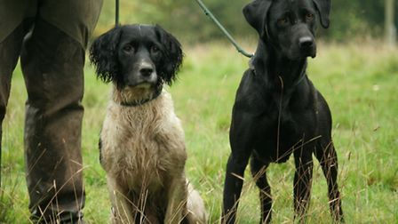 There is a gundog display by the picking-up team so you know what to do