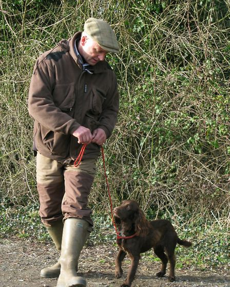 Some of the best picking-up dogs are kept on-lead while shooting takes place