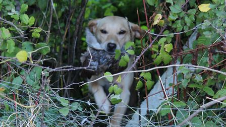 Gundogs are faced with a wide variety of obstacles that they must confidently overcome