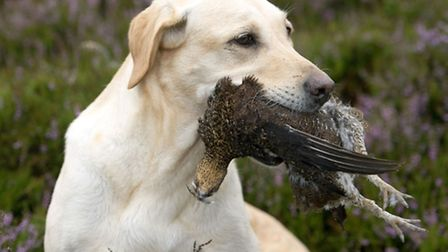 Scotland's 2014 grouse season hailed as the best in a generation