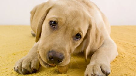 Small but timely rewards increase the likelihood that the puppy will repeat good behaviour.