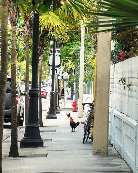 We stayed in the traditional part of Key West, opposite author Ernest Hemingways house where wanderi