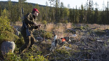 Daniel started the second day by releasing Kepp on the fresh tracks of two moose