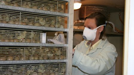 The cost of time and specialist equipment mean that few shoots hatch large numbers of their own eggs