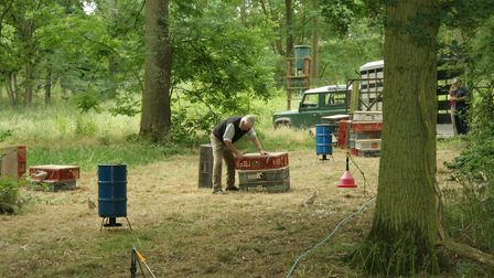 Pheasants will generally be fed a pellet mix with added protein and nutrients right up to and during