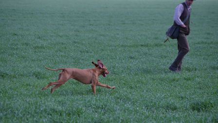 Ryan believes that training should also start early for the HPR breeds