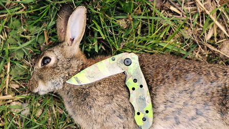 This simple knife might be all you need for rabbit duties