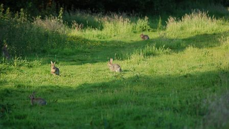 The rabbit is our biggest quarry and any of the pellets on test will drop them cleanly
