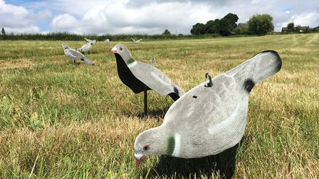 Decoys at the ready