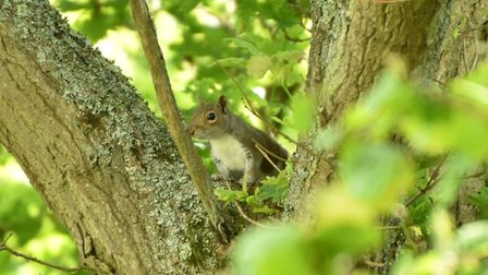 It seems that the squirrels like to be about early in this hot weather