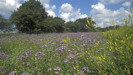 There are many options to consider when choosing cover crops