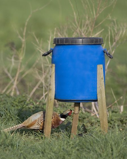 Feed hoppers are a tried and tested feeding method, but ground feeding may help to keep the birds in