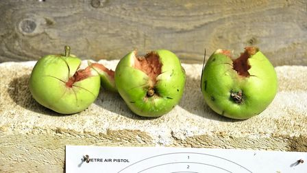 Blatting windfall apples is what fun is all about