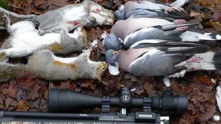 I know airguns can kill cleanly because I've done it thousands of times