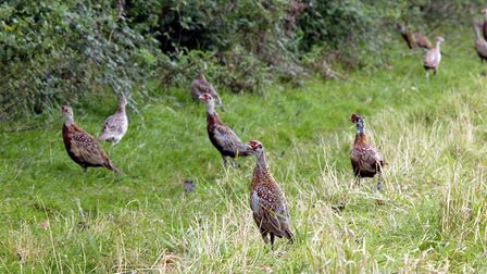 Contented birds are less likely to wander