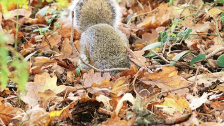Squirrels will still be feeing on the ground so look out for them
