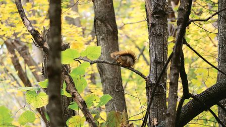 This squirrel was spotted a long way off and approached with stealth