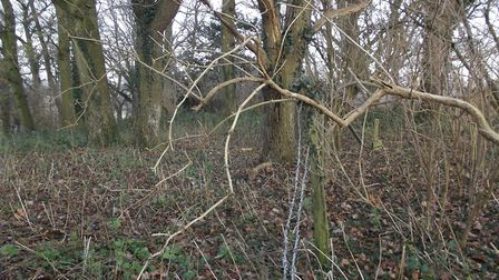 The barbed wire might be saggy but it marks out the boundary