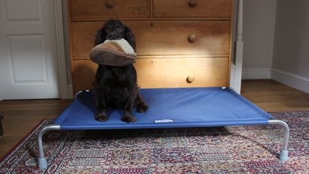 Think carefully before you reprimand your young dog for carrying around your favourite slipper...