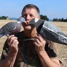 Andy Crow's top tips for laying the perfect pigeon decoy pattern... you can skip this part!