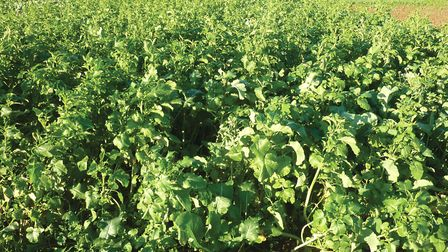 ssh keeper experts october game cover crop