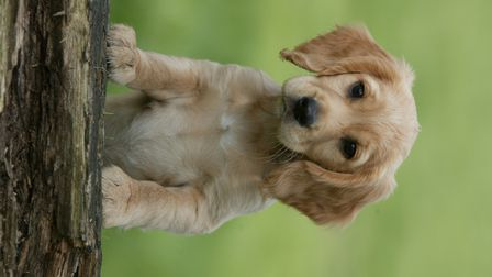Gundogs are amazing at smelling things, and consequently at hunting - working lines will have been s