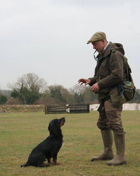 If you get hunting and find that the dog is not obedient to the sit whistle, it is back to basics!