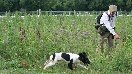 """Use your turn whistle and directional commands to re-direct the dog within the """"hunting box"""""""