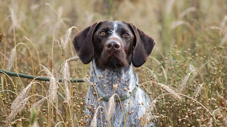 We have gathered a selection of gifts that are perfect for gundog lovers