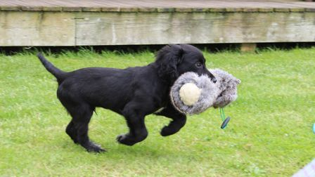The more mundane the puppy's training area, the more he will focus on you to provide his fun