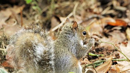 At this time of year squirrels are often found on the ground