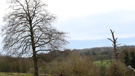 How things change. The 'skeleton' on the right was the best sitty tree on the shoot, until it fell a