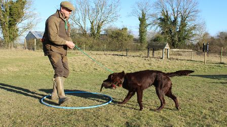 As soon as the dog picks the dummy, recall and give the lead a gentle pull, moving backwards and enc