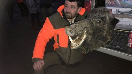 No 7 who's the ugly one - great boar - driven hunt - Corum