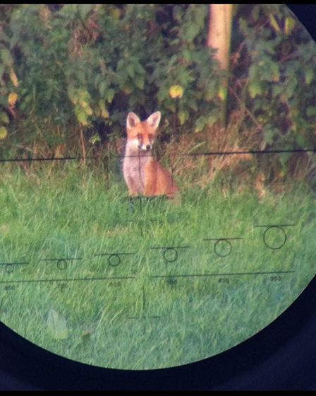 What is the optimum all-distance foxing round?