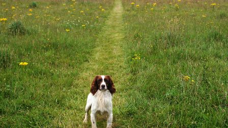 Retrieving corriders can help encourage a dog to go straight out and back to the handler