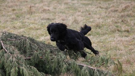 Make use of small 'birdy places' where the dog has been successful at finding game