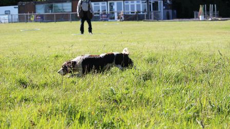 gundog training Teaching a dog to hunt and hold an area is important to avoid disturbing game elsew