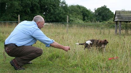 gundog training Ensure the puppy has a quick find and don't make things too difficult
