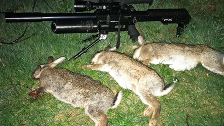 A trio of rabbits for the Impact/Pulsar Ultra N455 combo.