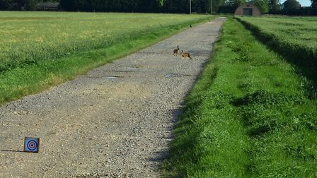 I couldn't believe the hares were just sitting there!