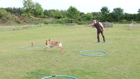 When handling a dog at distance, ensure all physical commands are clear and obvious