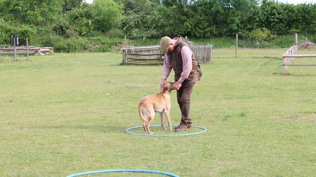 As the dog completes the first retrieve, set him back up for the next one