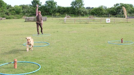 To send the dog back, have one arm straight up in the air, palm flat to ensure the dog sees it clear