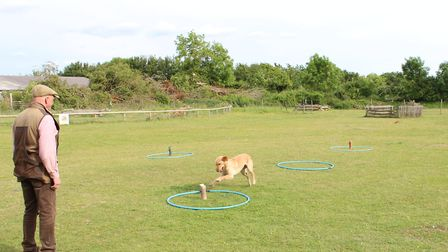 The six o clock dummy helps teach the dog that the recall is not a negative command