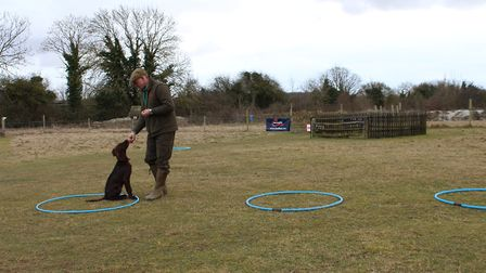 Rewarding your gundog with feed treats will not turn it into a sissy!
