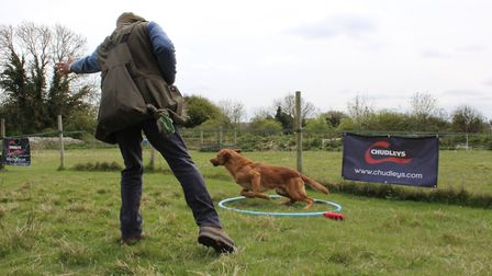 When the dog is ready, you can add distraction dummies into your directional work, so that the dog i
