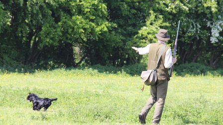 Quartering distances for hunting dogs will vary depending on the ground