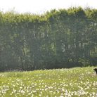 Avoid exercising in fields with fox tail grasses